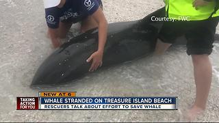 Police officers help rescue beached whale - Video
