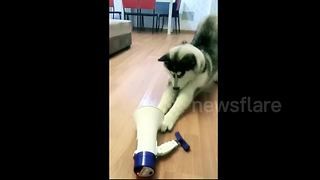 Man remotely controls his dog by playing his order through megaphone - Video