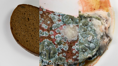 Bread left in water has incredible mold transformation