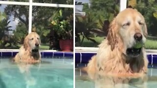 Dog falls asleep in pool with the tennis ball in her mouth