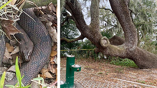 Mating snakes prompt closure of part of Florida park