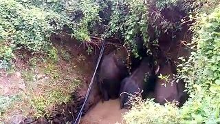 Heartwarming moment: Mother elephant helps calf to come out of 17ft well hours after falling into it - Video