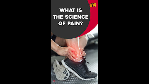Why Do We Feel Pain *