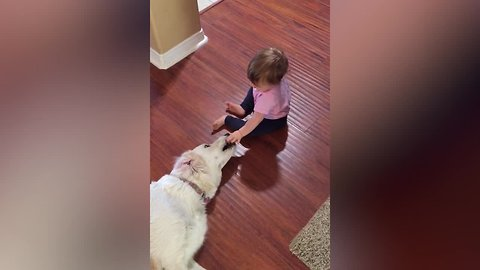 Babies Try to Make Friends with Dogs