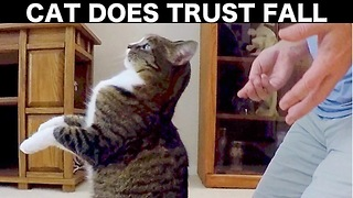 Adorable Rescue Cat Does Trust Fall With Owner