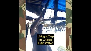 Using a Tarp to Collect Rainwater for Survival Situations