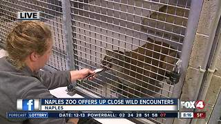 Naples Zoo offers up-close wild encounters - 8am Live Report - Video