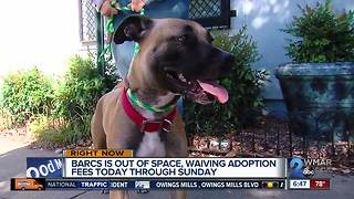 BARCS to waive adoption fees over weekend