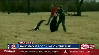 Wildlife agents investigate bald eagle poaching