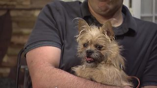 Adopt Jordan from the Buffalo Animal Shelter - Video