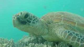 Talking Turtle Has a Chat With Visiting Diver - Video