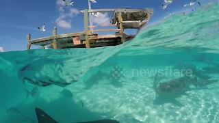 Watch a shark take a bite of a GoPro in the Bahamas - Video