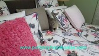 Cheeky Koala Joey Plays in Bed - Video
