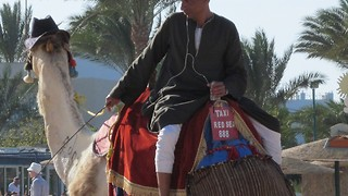 Taxi camel in Egypt - Video