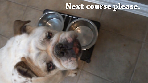 Porkchop the Bulldog's 3-Course Meal