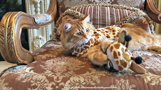 Funny Cat Gets His Claws Stuck In Owner And Giraffe Halloween Costume