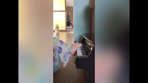 Little Girl is Pianist in the Making