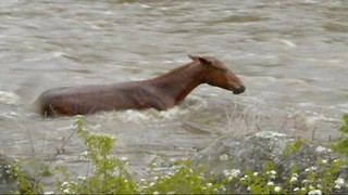 Horse Saved From Raging River After Two Hour Battle With Current - Video