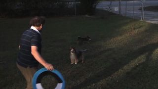 Collie Epically Fails At Frisbee - Video