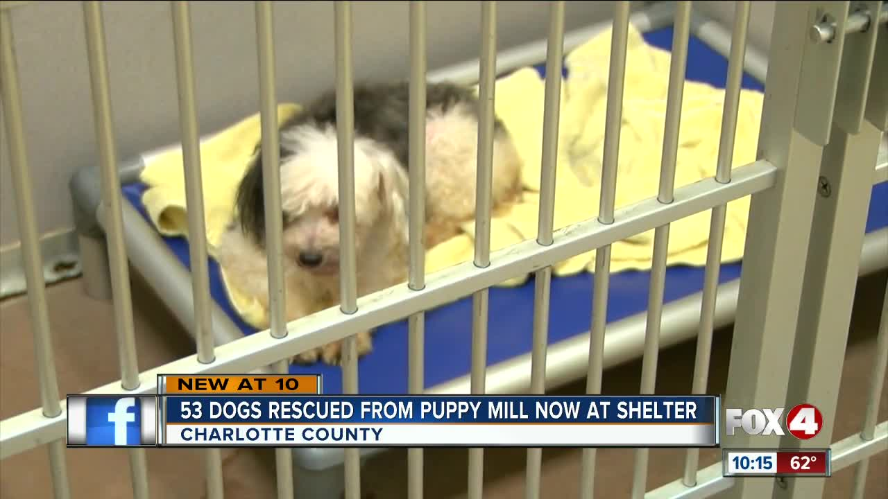 53 dogs rescued from puppy mill now at shelter