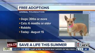 Free adoptions for dogs over 6 months - Video