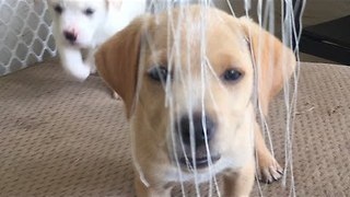 These Puppies Get Creative With Their Favorite Toy