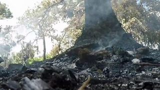 Firefighters watch for hotspotsafter 15-acre fire in suburban West Palm Beach - Video
