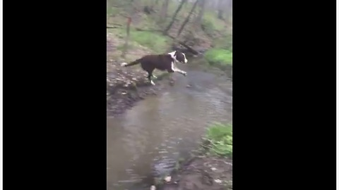 Jumping dog gets some serious airtime