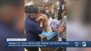 Dog rescued from the Detroit River