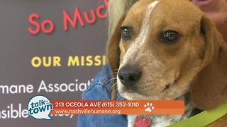 Nashville Humane Association Pet of the Week  6-30-17 - Video