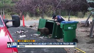 Bear cubs rescued after being trapped in trash bin