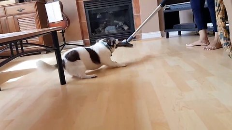 Dog Goes Wild When Gramma Vacuums