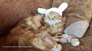 Funny Cat Lazily Protests Easter Rabbit Bunny Ears Hat  - Video