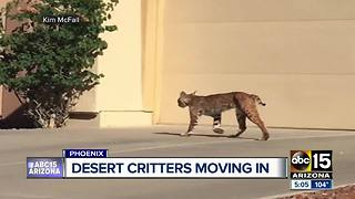 Desert critters popping up along with the summer heat - Video