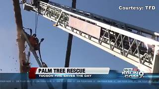 Firefighters rescue man trapped in palm tree - Video
