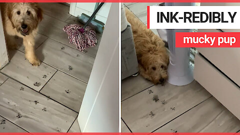 Pup ends up in the doghouse for leaving inky pawprint trail
