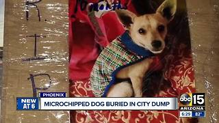 Valley rescue group outraged after no call about microchipped dog - Video