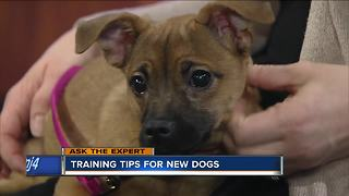 Ask the Expert: Puppy training tips - Video
