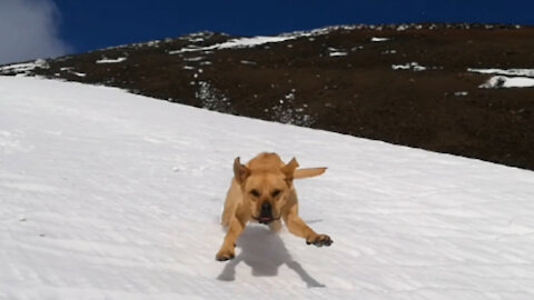 Crazy dogs reach the summit of the active volcano and discover they can downhill in the snow!