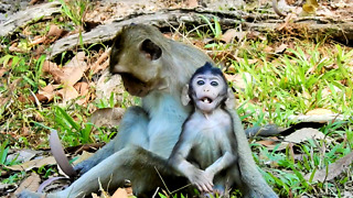 Poor Baby Monkey Vino You So Skinny Now  - Video