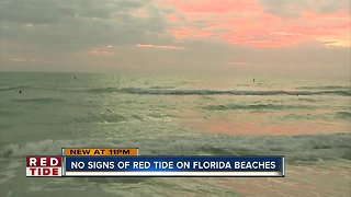 FWC report: Red tide not present on Florida beaches