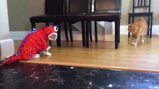 Here Comes Catzilla - Video