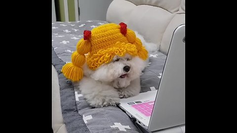 Wig-wearing pup watches videos on a laptop