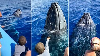 "Friendly humpback pops up to say ""hi"" to whale watchers - Video"