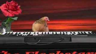 Talented Chicken Performs Amazing Grace Cover on Keyboard - Video