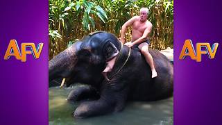 """20 Funniest Elephant Videos 