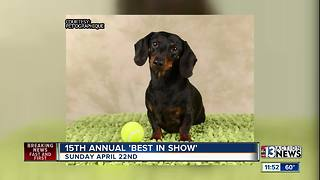 The Animal Foundation's 15th Annual 'Best in Show' - Video