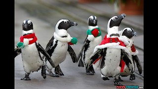 Christmas Penguins - Video