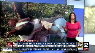 Having a dog around may be healthy for children - Video