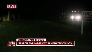 Manatee County Sheriff's Office search for possible tiger in Myakka City - Video